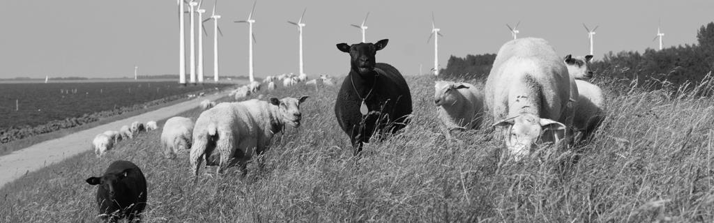 får på mark med vindmøller - dyrenes energi & dyrenes beskyttelse