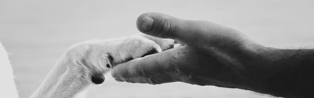 Dyrevelfærd dyrenesbeskyttelse